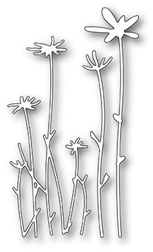 Tall Sketch Daisies